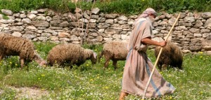 shepherd_leading_flock
